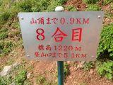 伊吹山~標高1377mに夏の花が来...