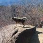 高川山(新ルートで登って、松葉ルートで降りる)