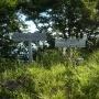 生野高原〜達磨ヶ峰〜フトウガ峰〜段ヶ峰〜杉山〜笠杉山 ピストン