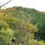 犬鳴山バス停から燈明ケ岳への直登ルートから大天井ケ岳より行者の滝に下り、高城山に登り返す。下りは林道を南下し粉河に