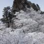 稲村ヶ岳、大日岳:清浄大橋起点行きレンゲ辻、山上辻経由、帰り法ケ峠、母公堂経由