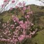 名野川登山口から岩黒山を一回り