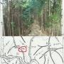 川井駅→赤杭尾根→川苔山→高瘤山→本仁田山→ゴンザレ尾根→高尾山