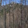 瑞牆山(みずがき山自然公園から周回)