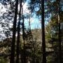 物見山から多峯主山、天覧山