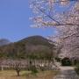 飯野山 - 眺めてよし、登ってよしの讃岐平野の名峰