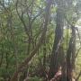 樫ヶ峰の表・裏キレットと「とかが尾山」周回