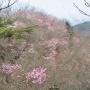 吹上バス停から鳴神山を経て桐生アルプスアルプス縦走