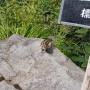 空沼岳 登山ルート