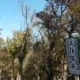 小岐須渓谷〜仙ヶ岳〜イワクラ尾根〜入道ヶ岳〜小岐須渓谷