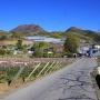 兜山 - 桃色に染まる甲府盆地を一望する