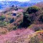 三浦半島横断
