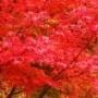 愛知川渓谷 (朝明渓谷〜中峠〜愛知川渓谷〜根の平峠〜朝明渓谷)