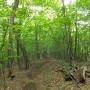 三頭山(石山の路から檜原都民の森を周回)